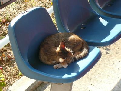土佐電鉄のベンチで眠る猫